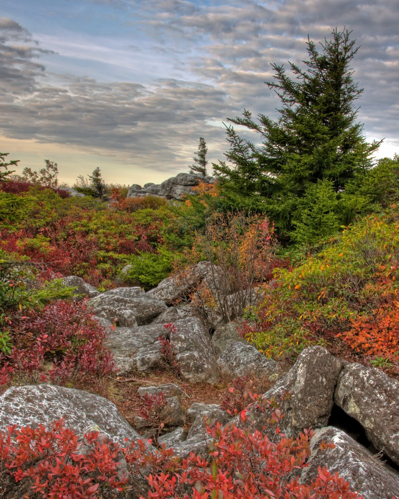 Bear Rocks, WV