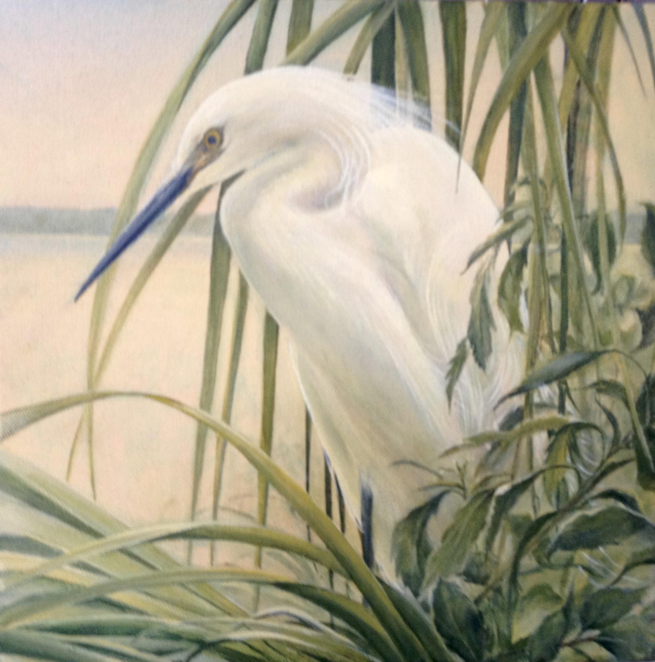 """""""Egret and Marsh"""" - oil - 12x12"""""""